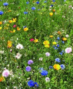 zdjęcie kwiecista łąka